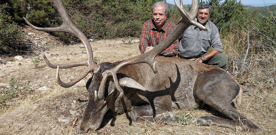 Anatolian Red Stag